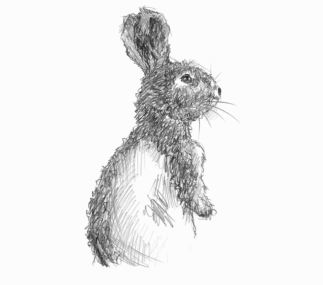 Skizze eines Hasen mit aufgestellten Ohren