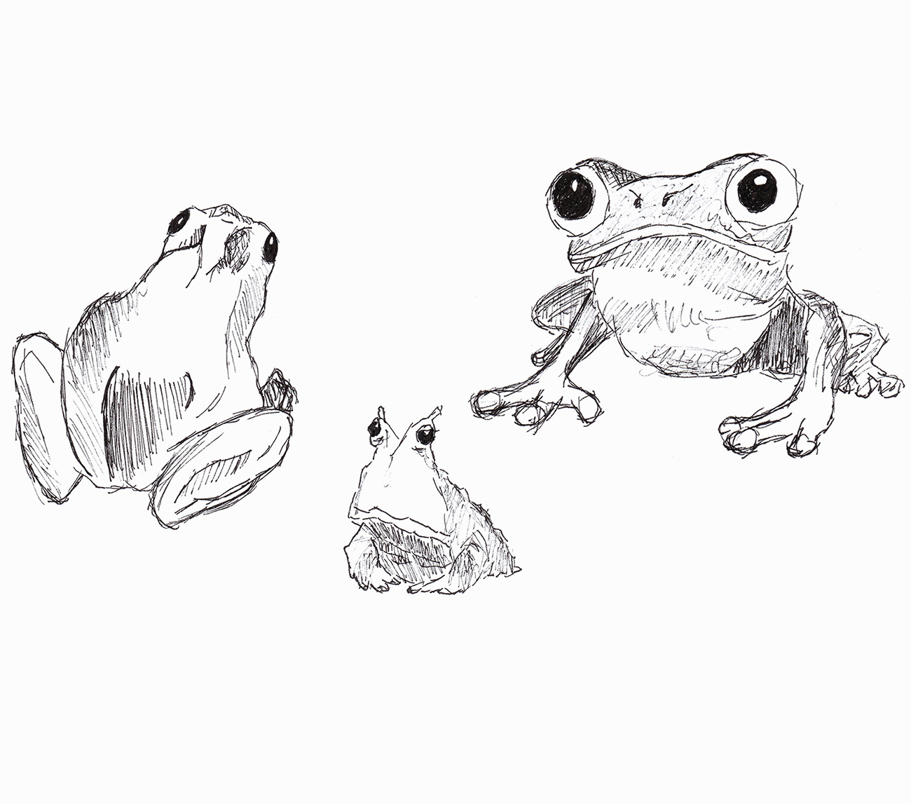 Skizze von drei Fröschen