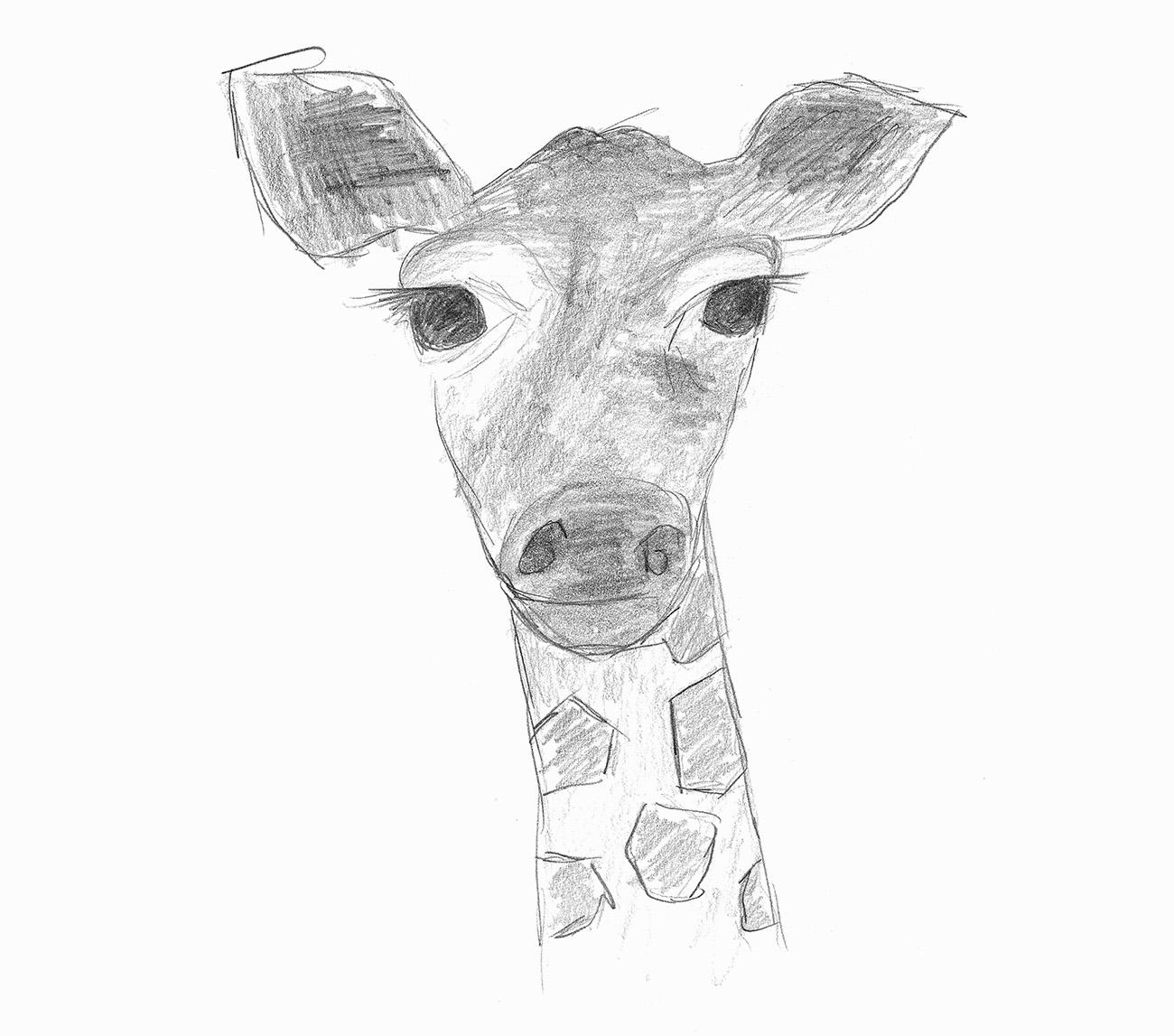 Skizze einer Giraffe