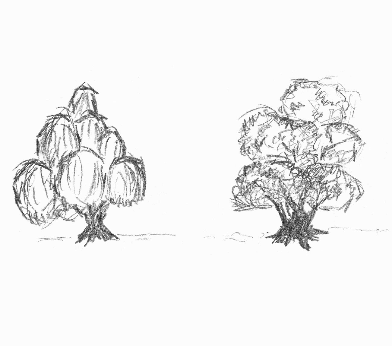 Zwei Baumskizzen
